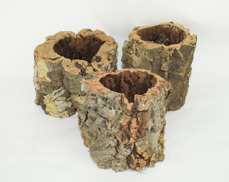 Doniczki z dębu korkowego